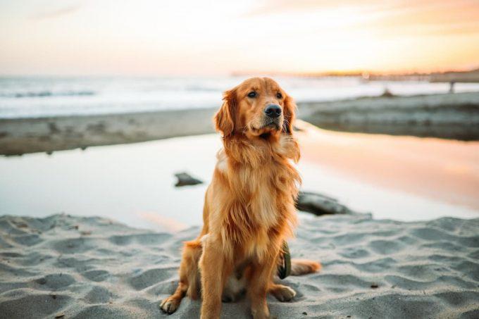 Cane in vacanza: in spiaggia