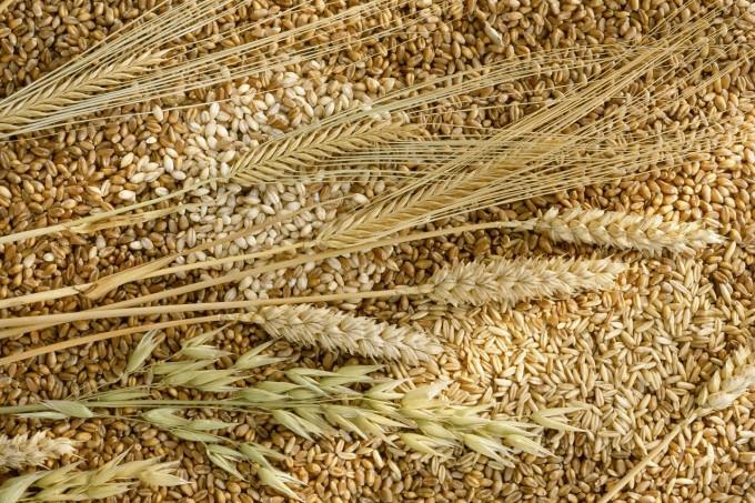 Senatore Cappelli pasta pane grano saraceno grano biologico grano glutine Creso carboidrati