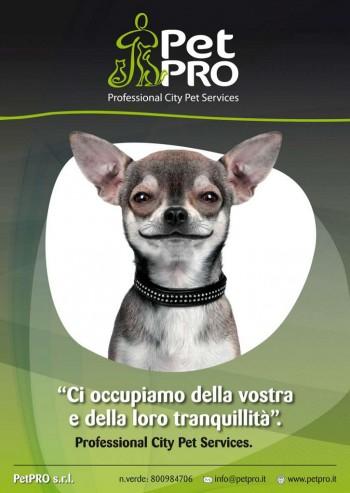 Professional City Pet Services