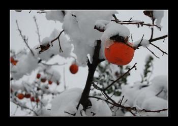 Foto di iabo77/flickr