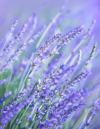 verde terrazze piante orti Milano giardini giardinaggio florovivaismo Flora et decora fiori attrezzi