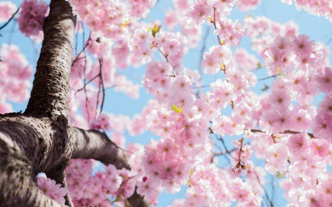 Fiori in primavera e allergia ai pollini