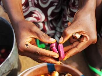 La noce di cola di Kenema della Sierra Leone: ©Paola Viesi
