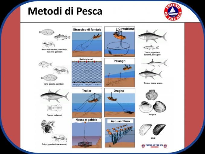 Metodi di Pesca - www.asdomar.it