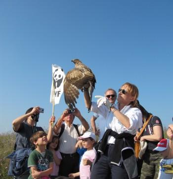 Liberazione dei rapaci, Barletta - foto WWF