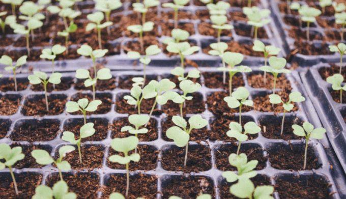 orto perfetto: il semenzaio