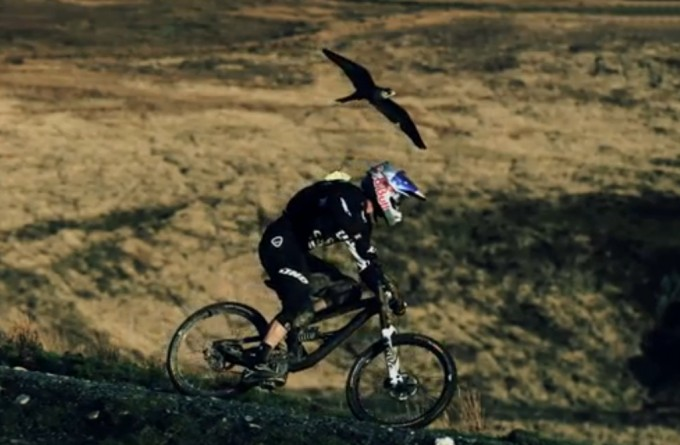 Biker e falco pellegrino, la sfida...