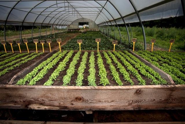 Agricoltura per la tua salute: nutrire l'anima, nutrire la mente, nutrire il corpo
