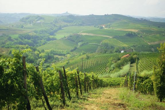 Vigna sulle colline italiane