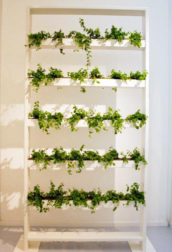 Green Biz parete verde