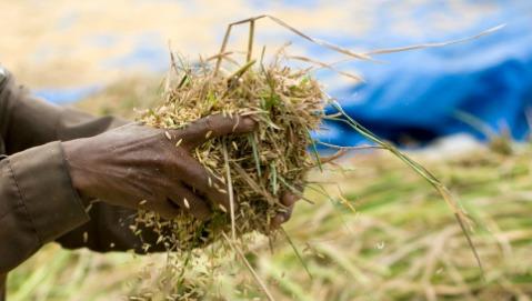 rifiuti OGM nutrigenomica medicina ambientale inquinamento acqua inquinamento cibo e salute
