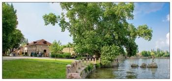 ulivo quercia secolare paesaggio olmi Legambiente foreste European Tree of the Year albero della vita