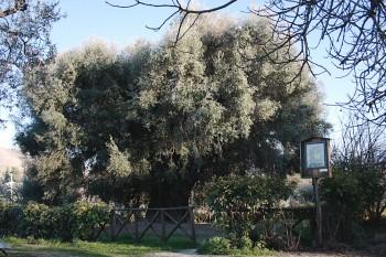 L'Olivo di Canneto Sabino - Sabina, Lazio, Italia
