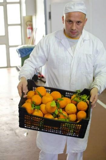 Sprigioniamo sapori Sicilia imprese no profit Dolci evasioni crisi economica cooperativa sociale Cooperativa lArcolaio cibo biologico benessere comune