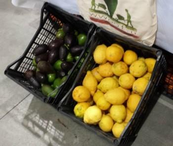 Avocado e limoni (Foto Mariella Caruso)