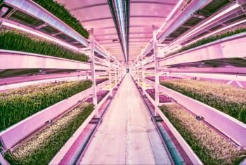 sostenibilità orto Londra impatto zero Growing Underground coltivazione idroponica