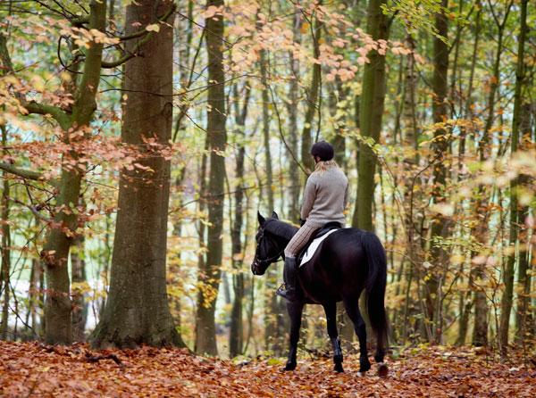Silviturismo a cavallo