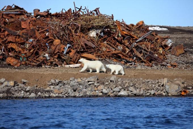 Orsi polari e riscaldamento globale