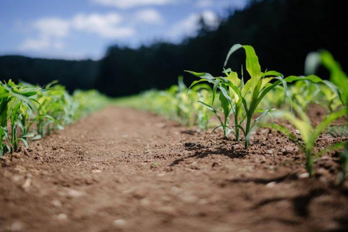fonti rinnovabili energie rinnovabili Biometano biomasse biogas