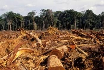 UNFCCC REDD+ Mirel Endara de Heras foreste tropicali emissioni c02 deforestazione COP21 Coalition for Rainforest Nations cambiamento climatico