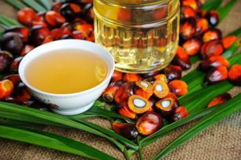 La questione olio di palma continua a essere al centro del dibattito, - image by iStock