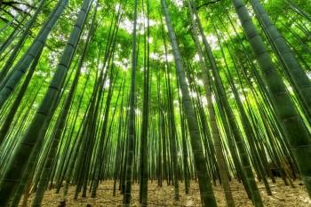 """La start up """"Forever bambù"""" propone mille usi della pianta di bambù, Foto: Pixabay"""