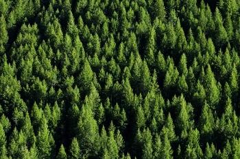 Passeggiare tra i boschi aumenta il benessere