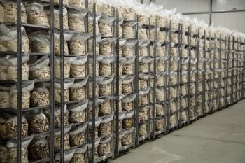 paglia Officina Corpuscoli Mycoplast micelio Maurizio Montalti materiali ecosostenibili funghi chitina bioedilizia bioarchitettura