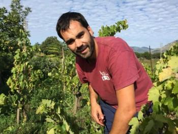 vino biodinamico, vigneto