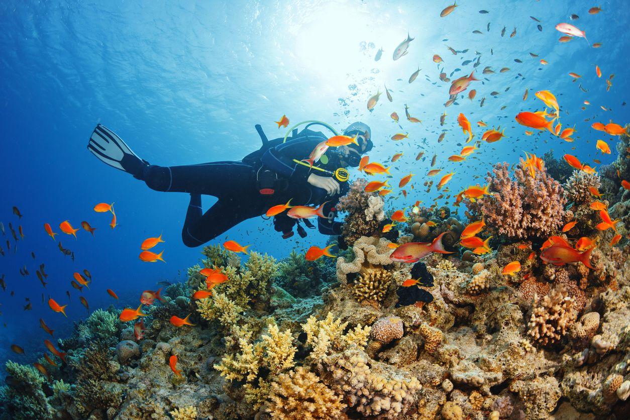 divecircle, fondali, turismo sostenibile