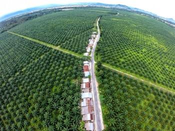 amnesty international, olio di palma