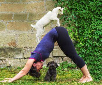 goat yoga, capre, stress, rilassamento