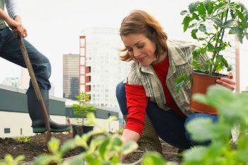 agricoltura urbana, citta dorti, orti