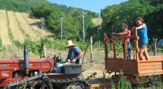 wwoofer in un campo agricolo