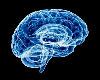 cervello, giovani, droghe, sclerosi
