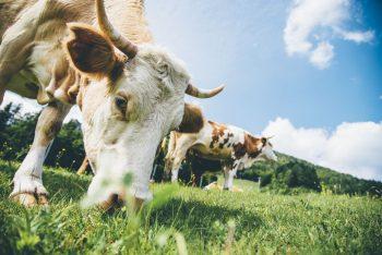 manurecomine, letame, fertilizzanti bio