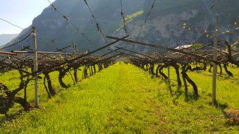vino biodinamico, biologico, lagerder
