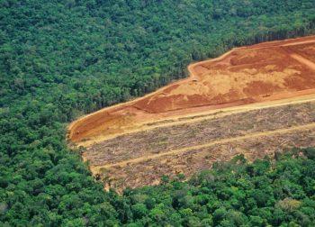 banche, deforestazione, olio di palma