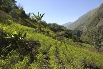 cocaina, america centrale, deforestazione