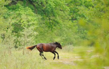 rewilder, natura, turismo, rewilding