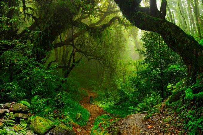 Foresta e biodiversità