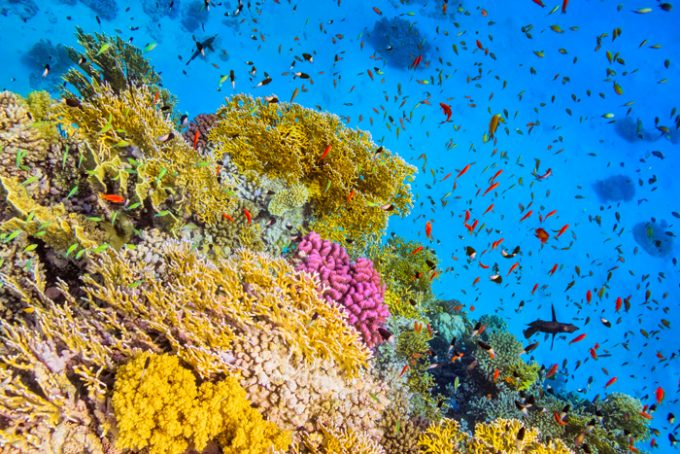 Ambiente marino e biodiversità
