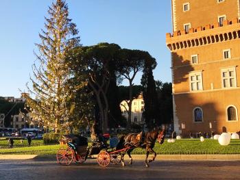pefc italia, spelacchio, natale, roma