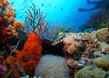 farmaci nel mare, biodiversità, tumori