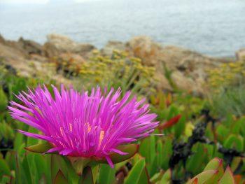 piante aliene, biodiversità, allergie