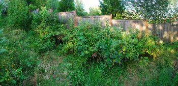 food forest, bosco edibile