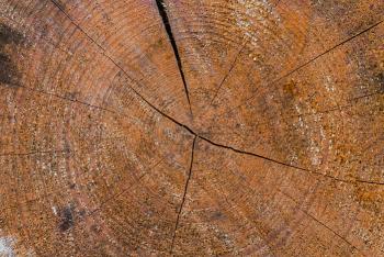 super legno, antiproiettile, trasparente