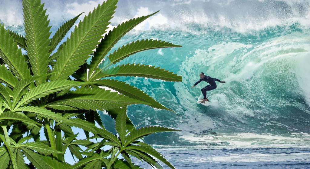canapa e surf