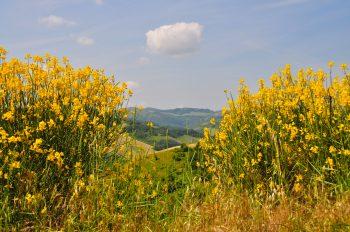 scarti agricoli, bioedilizia, naturalmentecolore