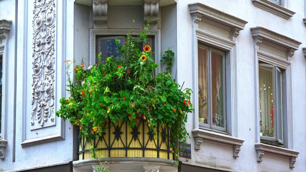 biodiversita, balcone, ecosistema, piante aromatiche